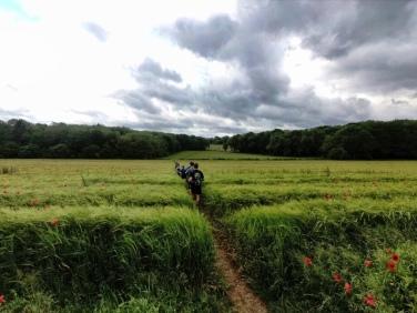 Long Grass Fields